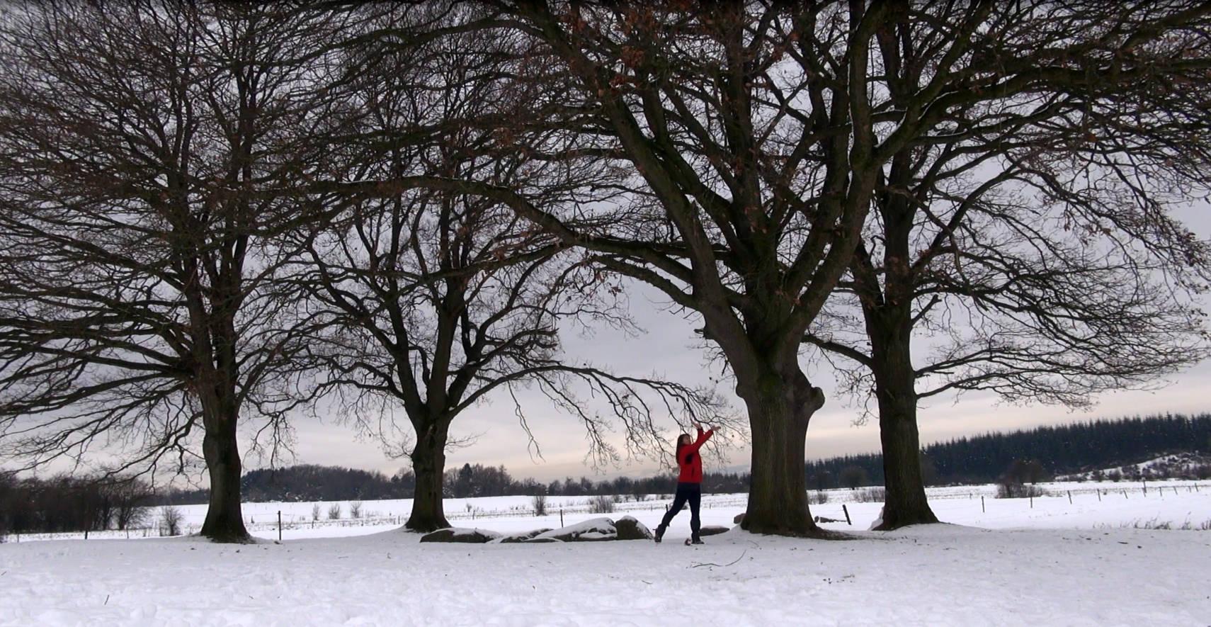 Tehima dans la neige